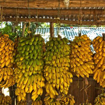 Madagascar Banane